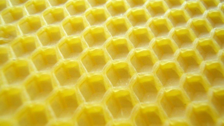 Zdjęcie węzy pszczelej